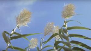 Rallo Azienda Agricola, #bianchistiditerritorio